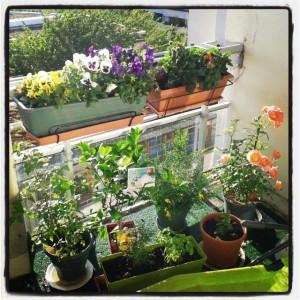 mon petit jardin parisien