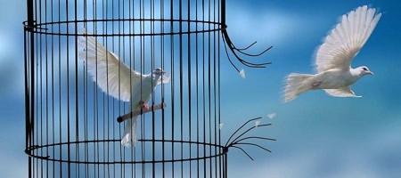 oiseau-cage-450x200