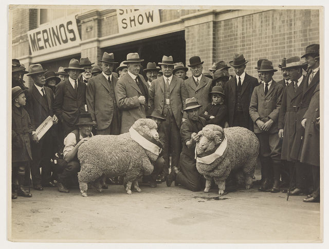 Sheep shows, sheep and wool industry / by Sam Hood